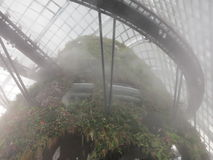 Mystic Cloud Forest Stock Images