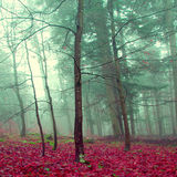 Mystic color forest Royalty Free Stock Photography