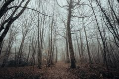 Mystic and dark forest covered with fog. stock photos