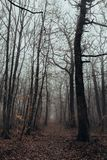 Mystic and dark forest covered with fog. royalty free stock images