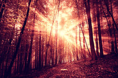 Mystic dark red saturated foggy forest Royalty Free Stock Photo