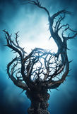 Mystic dark tree with thorns in blue fog Royalty Free Stock Photo