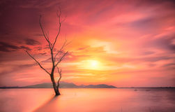 Mystic Dead Tree Stock Photography