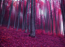 Mystic fantasy pink forest. Magic fantasy pink forest, misty forest Stock Photography
