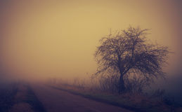 Mystic fantasy scene a foggy day Stock Images