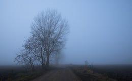 Mystic fantasy scene a foggy day Stock Photography