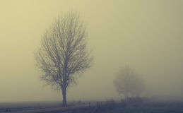 Mystic fantasy scene a foggy day Royalty Free Stock Photos
