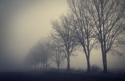 Mystic fantasy scene a foggy day Royalty Free Stock Image