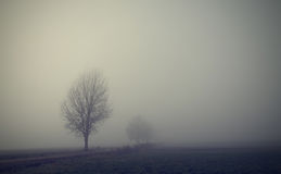 Mystic fantasy scene a foggy day Royalty Free Stock Images