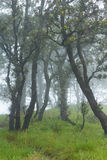 Mystic field. Fog with row of deep wood Royalty Free Stock Photography