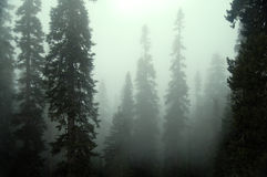 Mystic Fog Royalty Free Stock Images