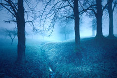 Mystic foggy fairy tale trees fantasy background Royalty Free Stock Image