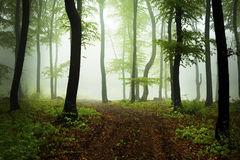 Mystic foggy fairytale trails Royalty Free Stock Photography