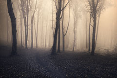 Mystic foggy fairytale trails Royalty Free Stock Images