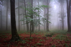 Mystic foggy fairytale trails Royalty Free Stock Photo