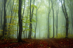 Mystic foggy fairytale trails Stock Image