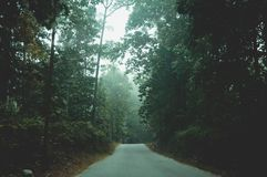 Mystic foggy forest road in first sunlight. Rural scenery of empty countryside dirt wet road leading through foggy forest of fall royalty free stock photography