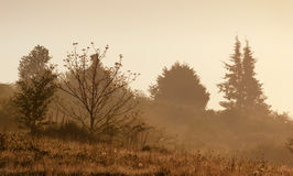 Mystic foggy landscape Royalty Free Stock Photo