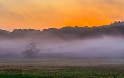 Mystic foggy sunrise. Over beautiful danish meadow Stock Photos