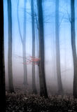 Mystic forest Royalty Free Stock Photography