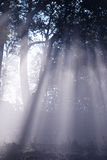 Mystic forest Royalty Free Stock Photos