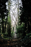 Mystic forest. On Highgate Cemetery, London, UK Stock Images