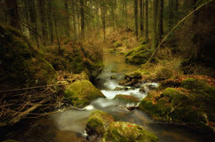 Free Mystic Forest Royalty Free Stock Image - 36911556