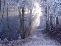 Mystic forest. Track in forest, sun light shining through the mist Royalty Free Stock Image