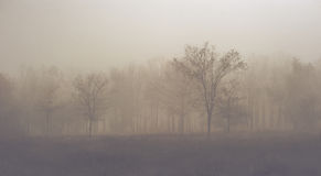 Mystic forest. The mystic autumn forest is in fog. Toned  picture Royalty Free Stock Images