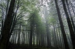 Mystic forest Stock Image