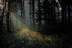 Mystic forest. In the daybreak with sun rays Stock Photo
