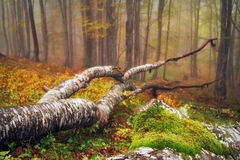 Autumn landscape. Mystic colored foggy forest royalty free stock photo