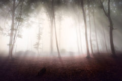 Mystic forest during a foggy day. A fairytale landscape with magic light Royalty Free Stock Photography