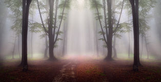 Mystic forest during a foggy day. A fairytale landscape with magic light Stock Image