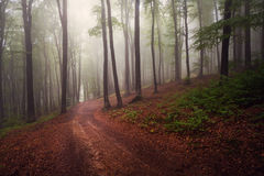 Mystic forest during a foggy day. A fairytale landscape with magic light Stock Photo