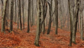 Autumn landscape. Mystic colored foggy forest. Autumn background Royalty Free Stock Photography