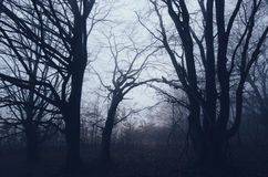 Mystic forest on Halloween night Stock Photography