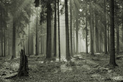 Mystic forest Stock Photography