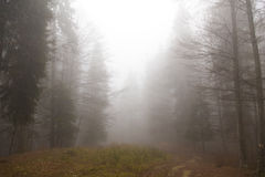 Mystic forest. Mystic mountain forest path in autumn Stock Photo
