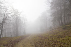 Mystic forest. Mystic mountain forest path in black and white stock photography