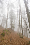 Mystic forest. Mystic mountain forest path with trail marking Royalty Free Stock Photos