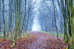 Foggy forest with a path Stock Photos