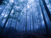 Mystic forest Royalty Free Stock Image