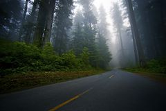 Mystic Forest Road Royalty Free Stock Photos
