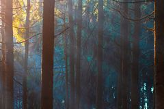Mystic forest in sunlight. Trees in woodland.  royalty free stock images