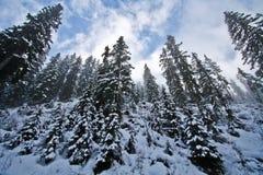 Free Mystic Forrest Stock Photos - 12528713