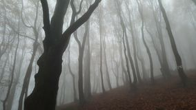 Mystic forrest Stock Photography
