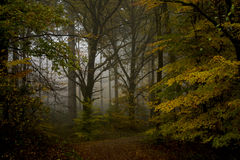 Mystic Forrest. The early morning fog photographed in the forrest. The leafs are already turning yellow stock images