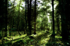 Mystic green forest stock photo