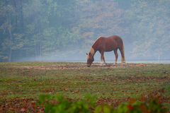 Mystic Horse. Lonely horse standing in field with myst Royalty Free Stock Photo